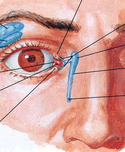 Chirurgia plastica facciale otorinolaringoiatria prof for Interno del naso
